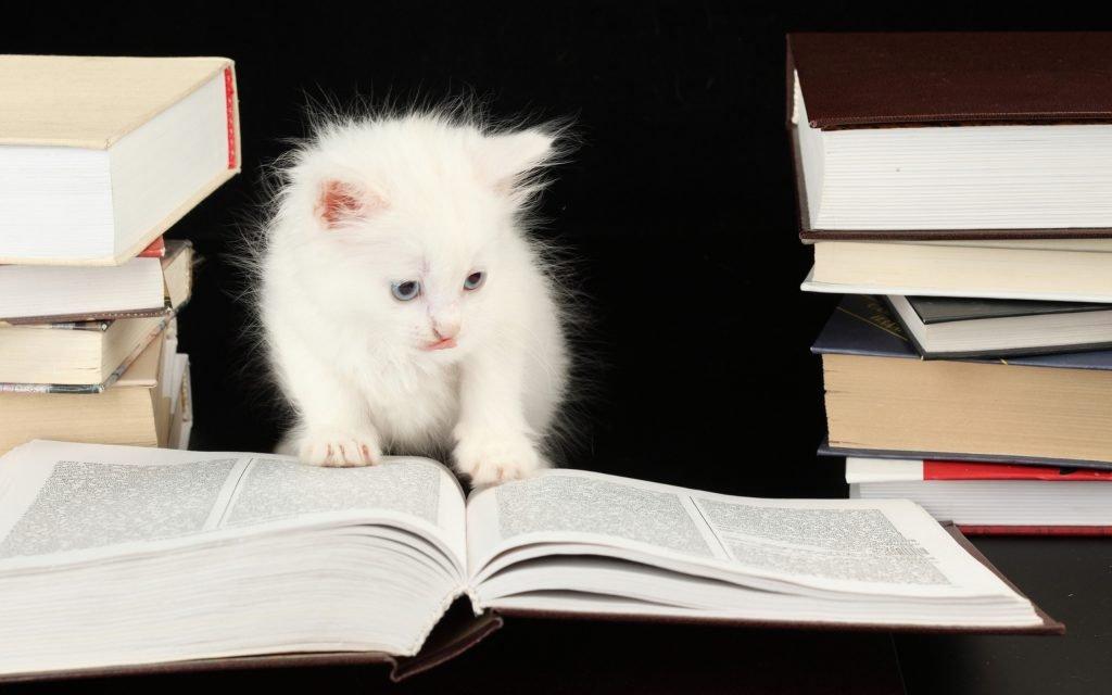 gato-estudando-livro-flúor